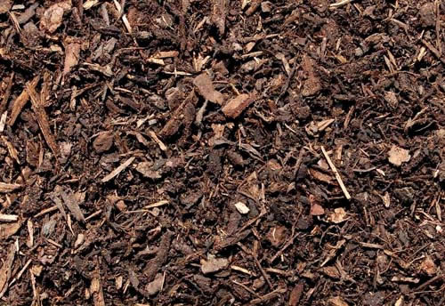 Compost Or Pine Mulch In Summer